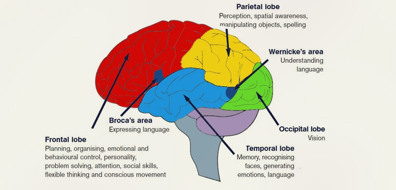 Human Brain Functions Functioning Of Human Brain With Diagram