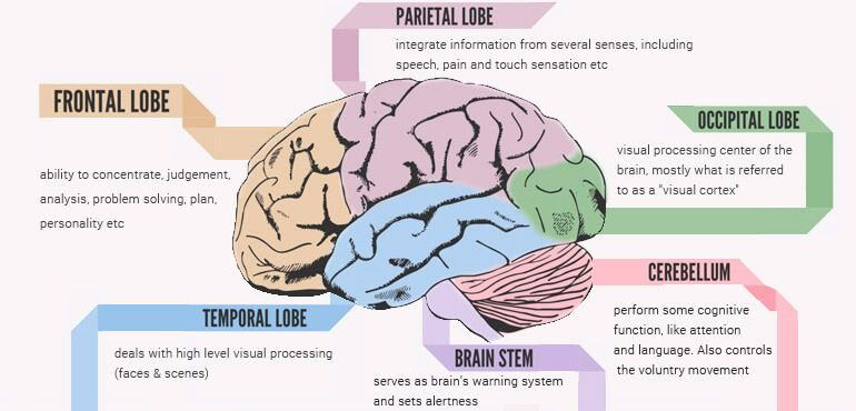 Human Brain Mapping How Human Brain Mapping Can Help You Understand This Master Organ? Human Brain Mapping