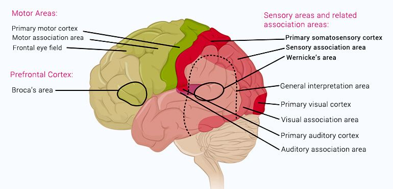 Human brain functions functioning of human brain with diagram human brain functions reasoning ccuart Gallery